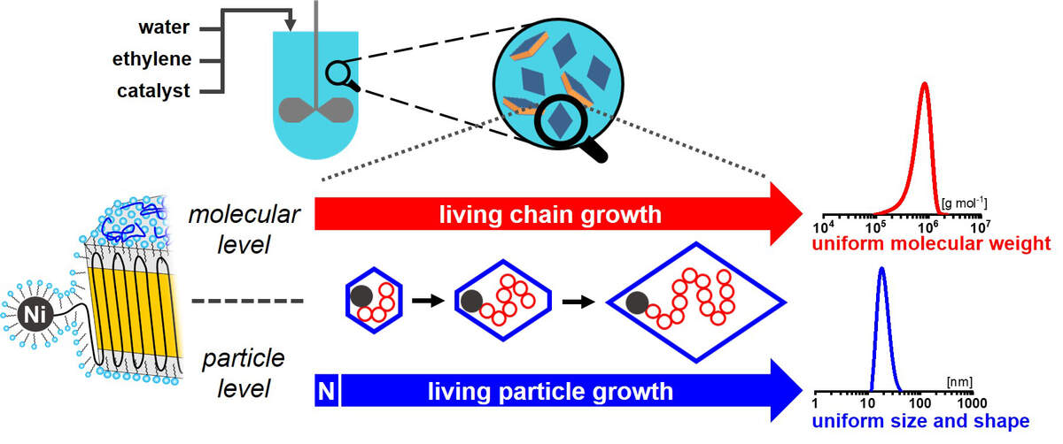 Concept to obtain uniform size and shape particles by controlled polymerization on a molecular as well as particle level. An effective nucleation (N) ensures that particles contain only one active site, and start to grow virtually at the same time. Due to the living character of polymerization, all particles continue to grow for the entire duration of the experiment, to yield particles each composed of a chain of identical length. As the growing chains are immediately deposited on the growing single-crystal particle during this process, particle shape evolves uniformly over time during polymerization. Copyright: Stefan Mecking and Manuel Schnitte