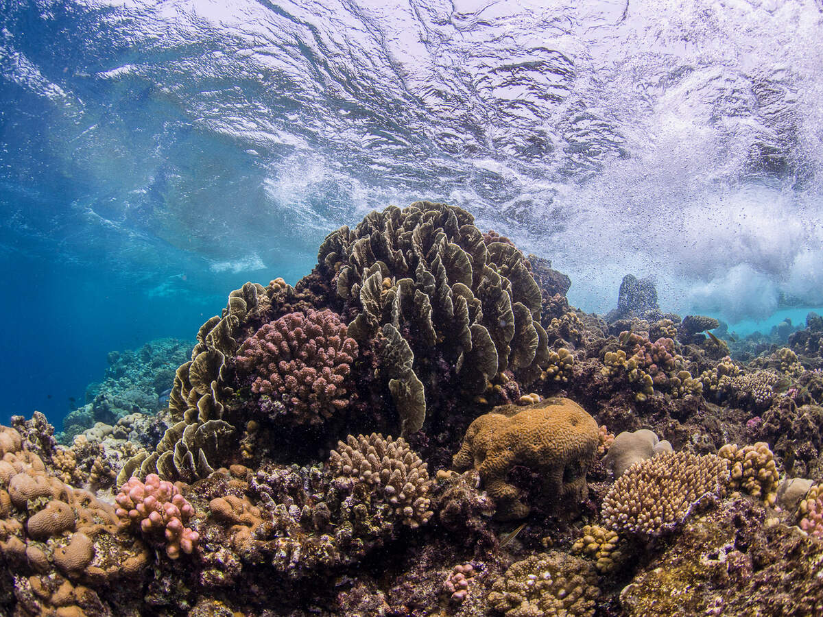 A shallow coral reef in the Central Red Sea. Copyright: Anna Roik